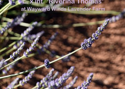 Riverina Thomas